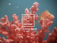 Color of the year Set - Living Coral